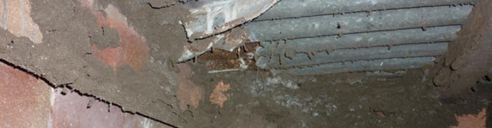 Termite Pre-Purchase Examination