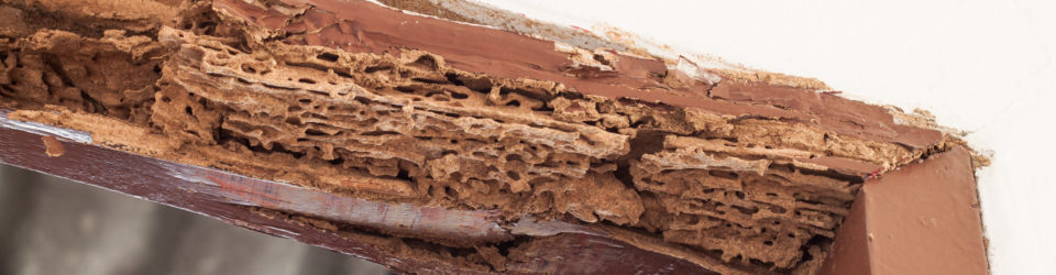 Will My Insurance Cover Termite Damage