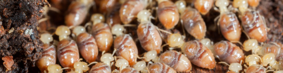 Am I at Risk for Termites in My Home