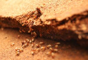 termite experts